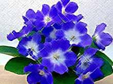 Каждому знаку зодиака - свой цветок