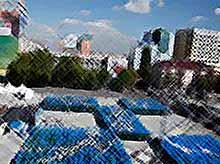 Краснодар стал самым массовым участником олимпийской акции в стране (видео)