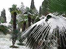 На Олимпиаде в Сочи синоптики обещают теплую погоду и затяжные дожди