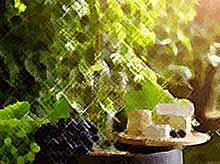 На Кубани благодаря западным санкциям выросло производство вина, сыра и овощей