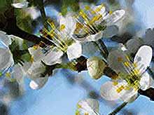 20 марта День весеннего равноденствия: приметы и традиции