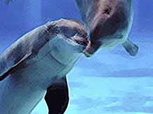 У дельфинов обнаружили полноценную речь