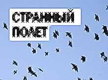 Странный полет птиц в Тимашевске (ФОТО)