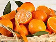 К Новому году в России подешевеют мандарины и апельсины