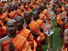 Тайских монахов атаковали пчелы