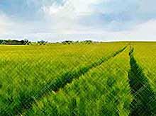 «Агрокомплекс» занял 2 место по площади посевов в России
