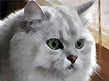 Сегодня - Всемирный день кошек (видео)