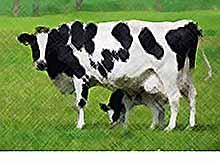 Размер субсидий на молочное скотоводство в 2017 году составит 8 млрд рублей