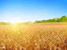 Минсельхоз предлагает отменить пошлину на пшеницу