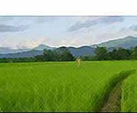 Фермерам  Кубани увеличат аренду земли до 20 лет