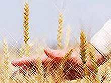 Праздник Урожая в Тимашевске! Приглашаем всех желающих!