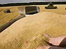 Кубань соберет рекордный урожай - 12 миллионов тонн зерна (видео)