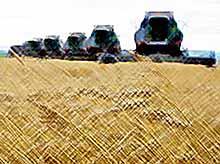В Краснодарском крае убрана половина урожая зерновых культур