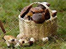 В Краснодаре отравилась грибами многодетная семья