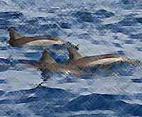 Дельфины попали в  ледовую ловушку  в Азовском море  (видео)