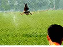 В России  хотят применять беспилотные летательные аппараты в сельском хозяйстве.