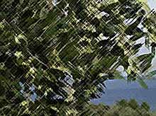 В Крыму посадят оливковые рощи