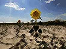 На Кубани ожидается засуха