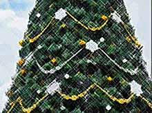 В Краснодаре установят главную новогоднюю елку  к 15 декабря