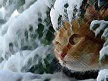 Кошки убивают миллиарды существ