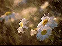 На Кубани снова прогнозируют дожди