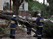 В Краснодаре штормовой ветер за 2 дня повалил 35 деревьев и сорвал крышу с краевой филармонии