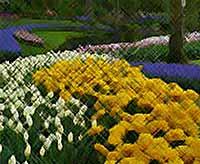 Первые весенние цветы (фото)