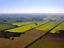Назван ТОП - 5 крупнейших владельцев сельхозземли