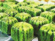 Житель Краснодарского края вырастит квадратные арбузы