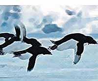Первое апреля - день, когда пингвины научились летать (видео)