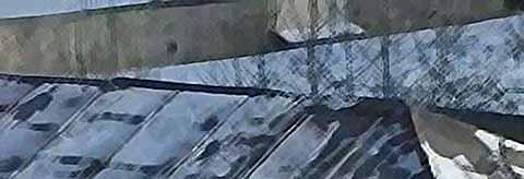 Ворона- сноубордистка (видео)