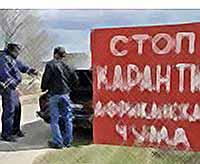 В Тимашевске карантин по чуме снят! Но разводить свиней пока нельзя