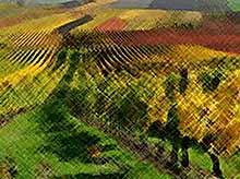 Губернатор Кубани: закон о развитии виноградарства поддержит малых производителей региона.