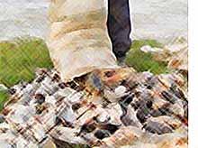На Кубани ужесточат контроль за ловом и сбытом рыбы.