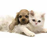 Какие  загадки скрывают столь любимые нами кошки и собаки?   (видео)