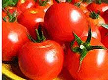 Турецкие помидоры  вернутся в Россию только через несколько лет