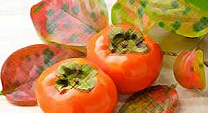 Осенние фрукты: хурма, и что вы знаете о ней