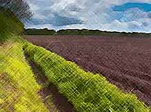 Россия на четвертом месте в мире по количеству плодородных земель