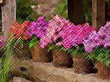 В Краснодаре открылась крупнейшая на юге России цветочная ярмарка