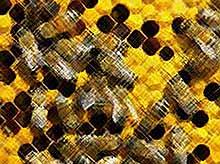 В доме для продажи оказалось более 3-х миллионов пчел