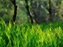 Ученые из Краснодара научились получать энергию из растений и микробов