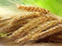 Россия увеличила экспорт зерна в дальнее зарубежье на 40%