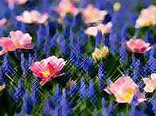 Цветы могут лечить многие болезни