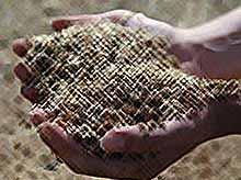 Будет-ли Россия закупать пшеницу за рубежом?