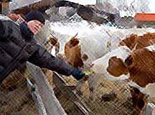 Начинающему фермеру будут выделять  1,75 миллиона рублей