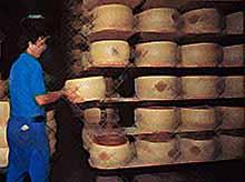 Силовики разоблачили банду поставщиков запрещенного сыра