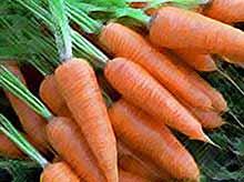 Морковь заняла первое место