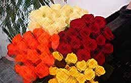 В Калининском районе будут выращивать розы по голландским технологиям