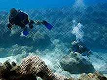На дне океана обнаружили судно со сказочными богатствами (видео)