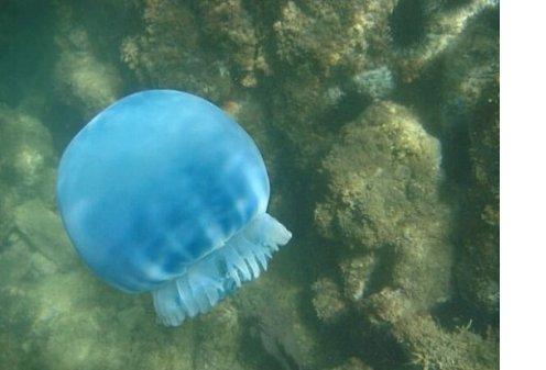 В океане обнаружены неизвестные науке существа